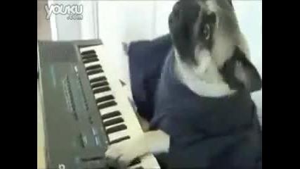 куче свири на йоника
