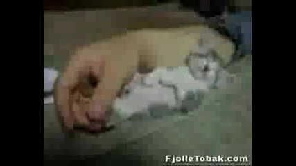 Сладко Коте!