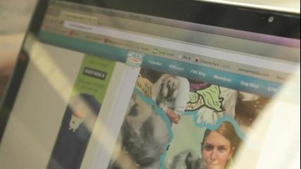 Котка хейтва във фейсбук (смях)