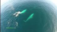 Смайващи кадри! Делфини в миграция. Семейство гърбати китове , малкото им в прегръдка с майка си !