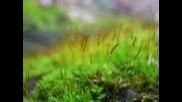 Звуци от природата