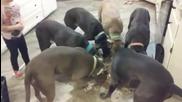 Малко момиче показва как се командват кучета