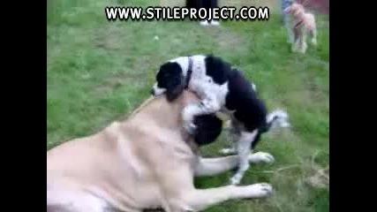 Куче Любовчия
