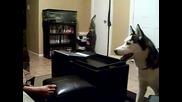 Куче се страхува от Джулия Робъртс