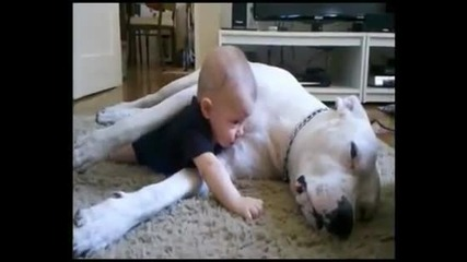 Любов между голямо куче и малко дете!