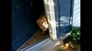 Кученце се радва че вижда стопанина си който се е върнал от Афганистан!
