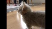 Mалко коте