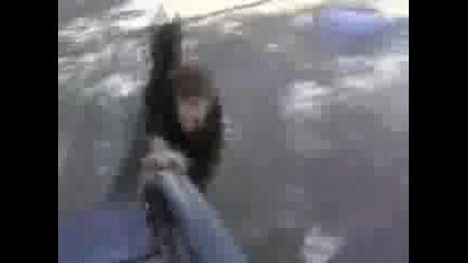 Не правете това с вашия скейт
