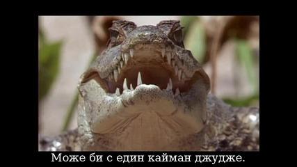 Анаконда срещу алигатор