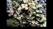 Честита Първа Пролет!!!!
