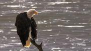 Eagle - Abba