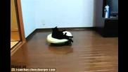 Котка се вози на подвижна възглавница (смях)