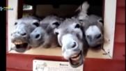 Забавни Клипове 2018 - Смешни Животни Правят Смешно Звучи Компилация