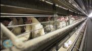 U.S. Bird Flu Outbreak Reaches Michigan