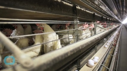 U.S. Bird Flu Outbreak Reaches Michigan
