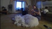 Качествено ресане на куче