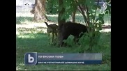Десеторно скачат глобите за нерегистрирани домашни кучета
