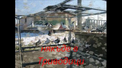 гълъбите на Панко