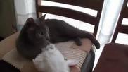 Котка се маскира като заек