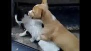 Голям смях - Кученце и котка се борят