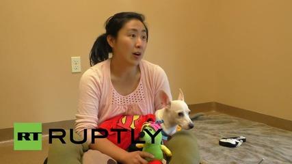 САЩ: Сакатото кученце Нимби си търси дом