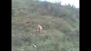 Ловно куче търси пера от пътпадъци овити в парцал.