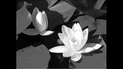 водни лилии