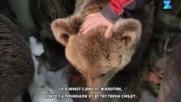 Препарирани животни в секс пози