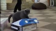 Смях! Котките могат да бъдат непредсказуеми!