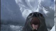 Животът на тюлените