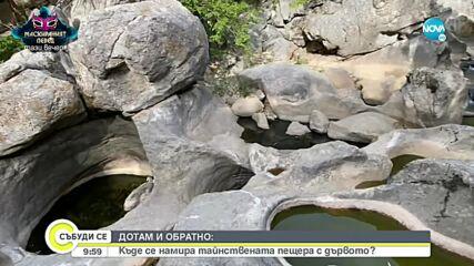 """""""ДОТАМ И ОБРАТНО"""": Разходка до """"Пещерата с дървото"""""""