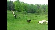 Raspotnik Farm Horse Herd in Wisconsin