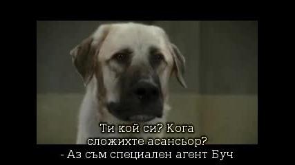 Кучета и Котки.отмъщението на Кити Галоре ( 1 част)
