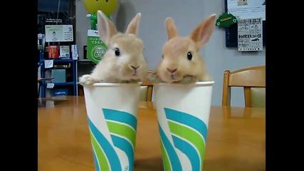 Сладурски зайчета