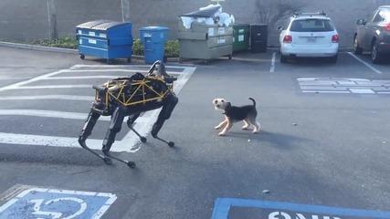 Роботът Спот и кучео Фидо се срещат