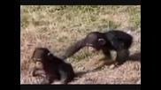 маймунска работа 100% смях