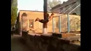Parkour & Freerunning - Crazy Jump 100%.1