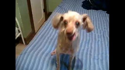 Най - странното куче на света!!!