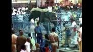 Слон вилня в Индия