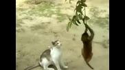 Малка маймунка се люлее на клон и се закача с котка!