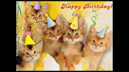Happy Birthday Kittens