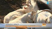 Умъртвяването на животни в Шарково и района ще продължи