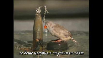 Axel Rudi Pell - I Believe In You (превод)