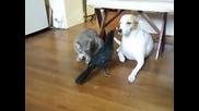 Необикновеното приятелство между гарван, котка и куче!
