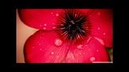 Ridgewalkers feat El - Find (photographer Bootleg Remix)