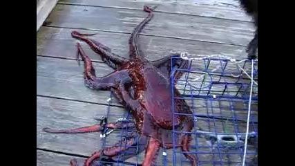 Гигантски октопод