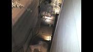 Човек спасява кучето си от атака на енот ! :)))