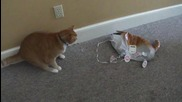 Коте се страхува от балон играчка