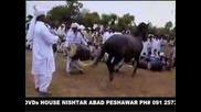 Horse Dance In Pakistan