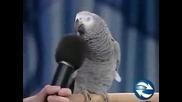 !!! Смях!!! Говорещ Папагал